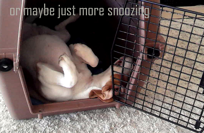 gerts-snoozing